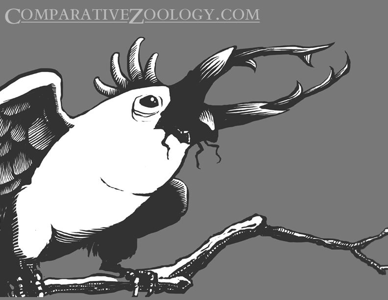 cockatoo_stagg